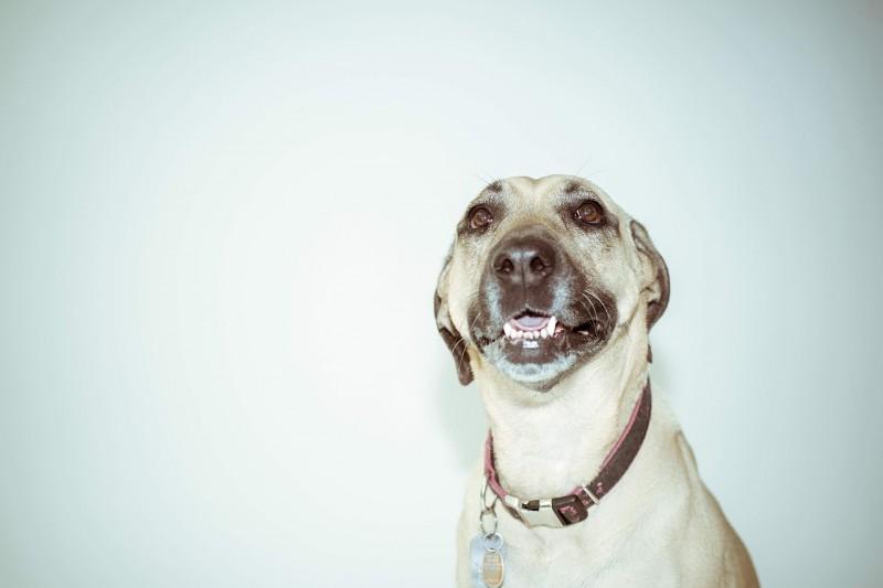 Trænger din hund til et nyt stilfuldt halsbånd?